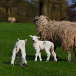 """(158) """"わたし(イエス)が来たのは、羊(人々)がいのちを得、またそれを豊かに持つためです。"""""""