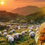 """(372) """"主は私の羊飼い。私は乏しいことがありません。"""""""
